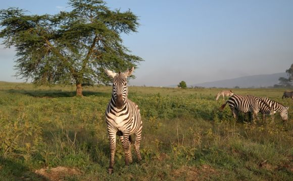 zebra-vacation-africa