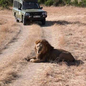 lion verkleind 2